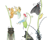 虫がおしえてくれること 〜「二十四節気 虫のお話」原画展~|おのりえん・作/秋山あゆ子・絵