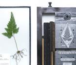 植物標本と活版印刷 Plants Trade|Plants Trade
